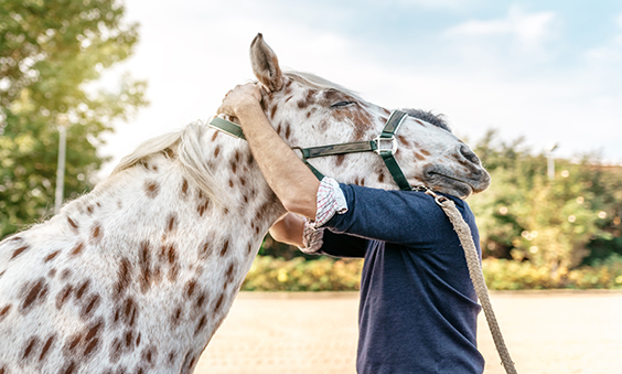 chiropractor with horse